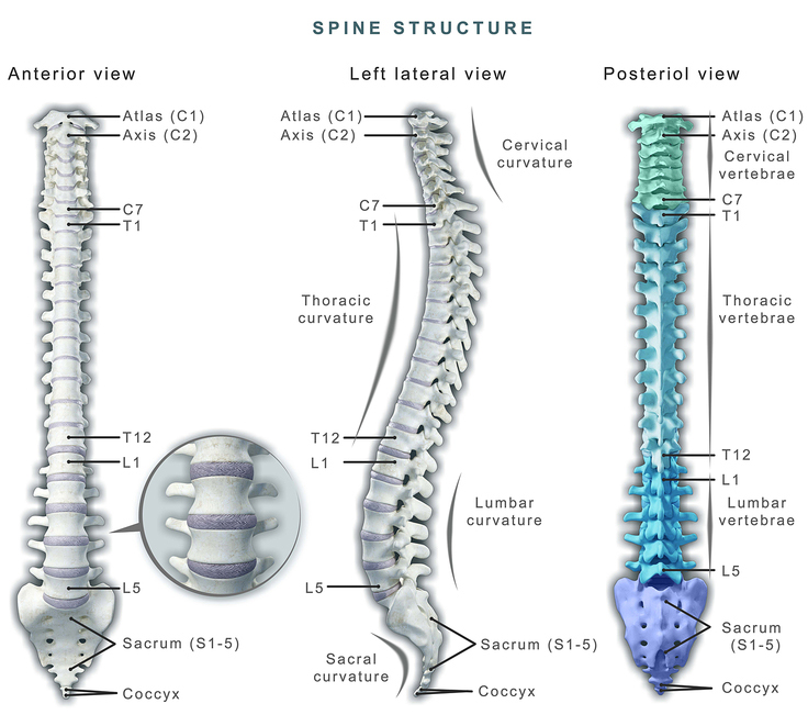 Lumbar Radiculopathy (Nerve Irritation)